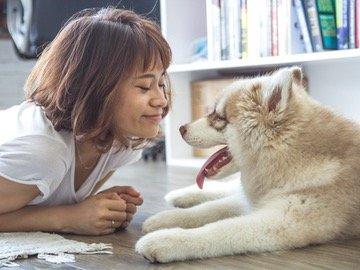 Eksklusiivinen Zooplus alennuskoodi jolla koiranruoat sekä kissanruoat ja -hiekat -10% alennuksella!